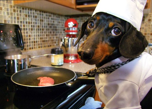 He Knows The Way To A Woman S Heart With Images Crusoe The