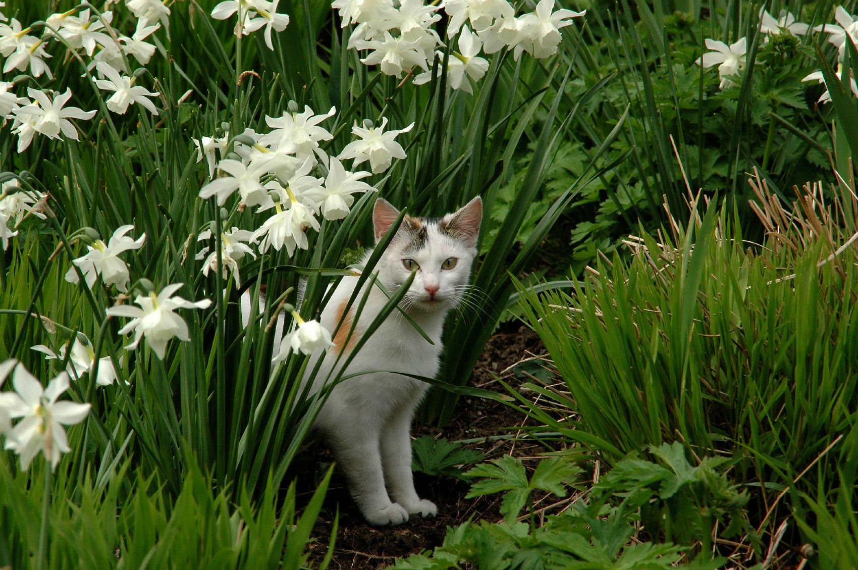 Cat Repellent How To Keep Cats Out Of The Yard Plants