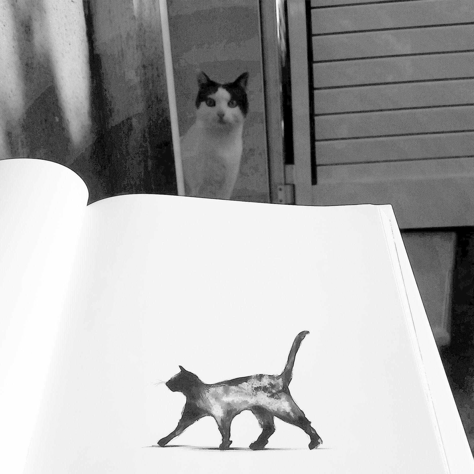 """Mini y la lectura del #libro de Paula Bonet """"Qué hacer cuando en la pantalla aparece the end"""" #cat #gato"""
