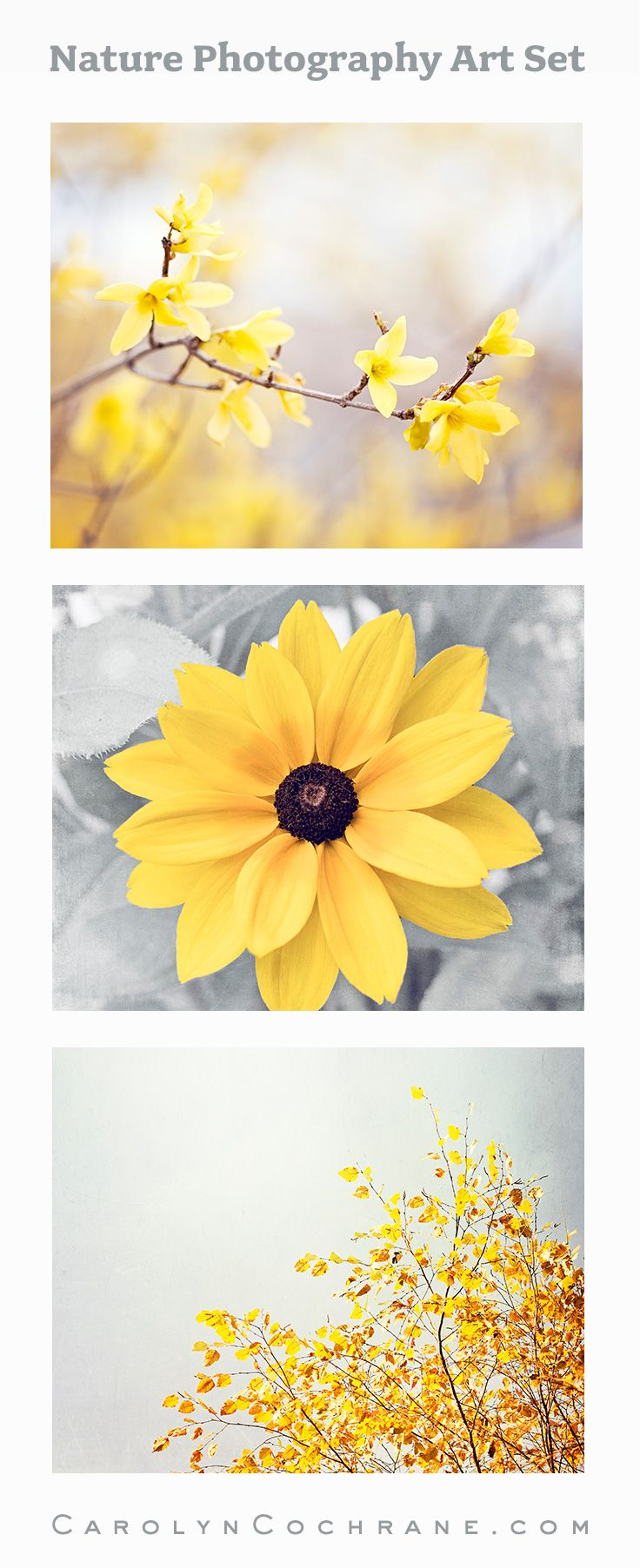 Yellow Nature Photography, Set of 3   Pinterest   Grey flowers ...