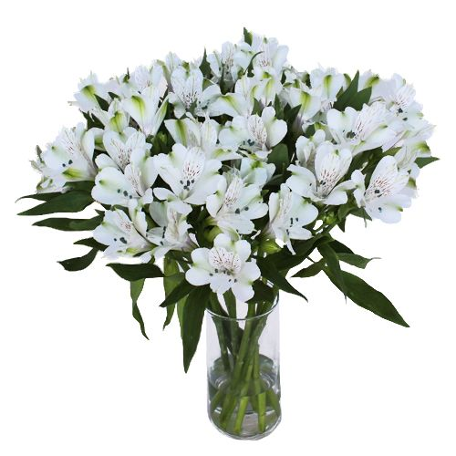 White alstroemeria fresh flower fresh flowers peruvian lilies and white alstroemeria fresh flower mightylinksfo Gallery
