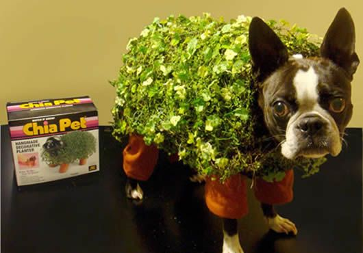 Dog & Chia Pet Halloween Costume | Marilyn | Pinterest | Chia pet ...