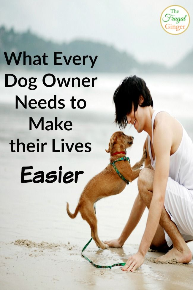 What Every Dog Owner Needs to Make their Life Easier Dog