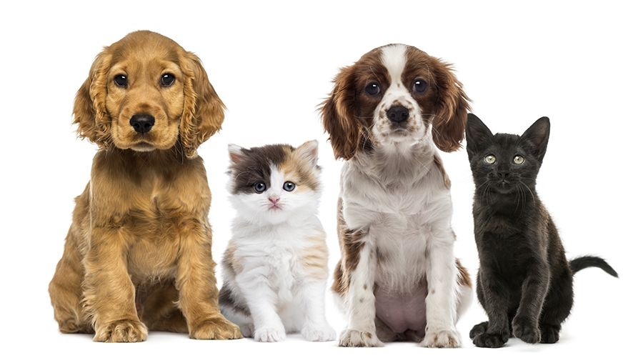 Pet Wellness Plans For Puppies Kittens And Adult Dogs And Cats From Androscoggin Animal Hospital Dog Stock Images Animals Animal League