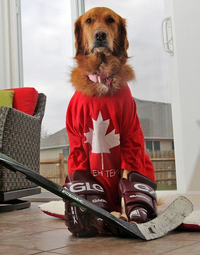 Dog Hockey If I Could Get Gloves On My English Bulldog To Take A Picture Like This I Would Be Rollin On The Floor Laughing Too Hard Puppy Love Dogs