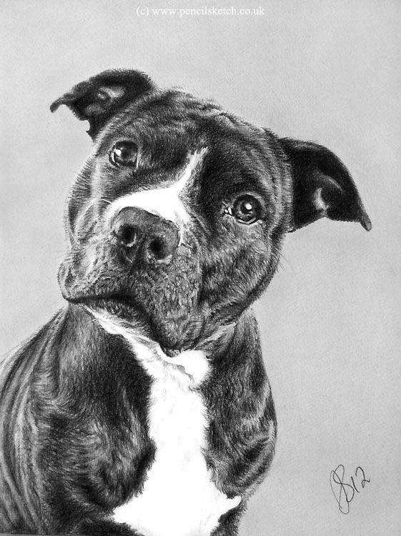 Http Www Pencilsketch Co Uk Images Pencil Pet Portrait 2 Jpg