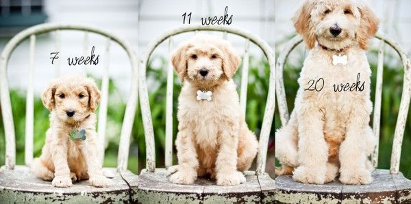 Cute Progressive Puppy Photoshoot Idea For The 1st Year Of Dog S