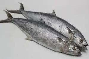 khasiat ikan tongkol untuk kesehatan yang jarang diketahui fauna id ikan ikan tenggiri nutrisi khasiat ikan tongkol untuk kesehatan