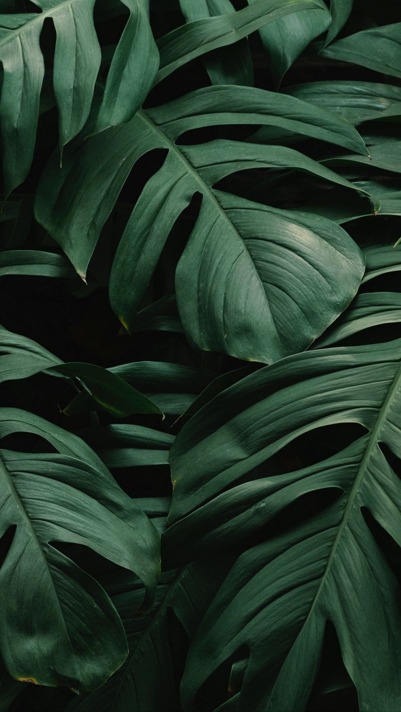 Download wallpaper 800x1420 leaves, plant, green, dark, vegetation iphone se/5s/5c/5 for parallax hd background #darkiphonewallpaper