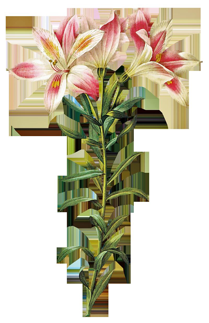 Flores Naturales Natural Flowers Para Teraza