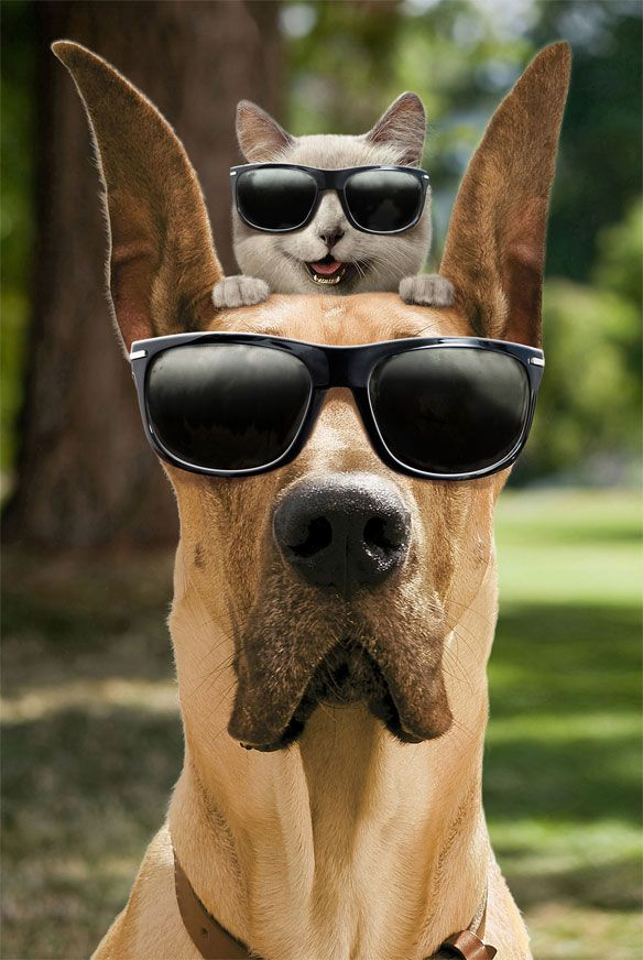 Carlos Marmaduke Comic Great Dane Dog Breed Cartoon
