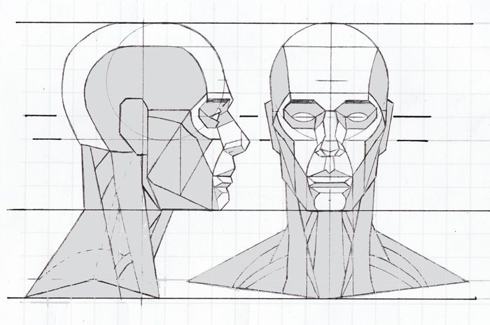 head proportions - Google Search (With images) | Human ...