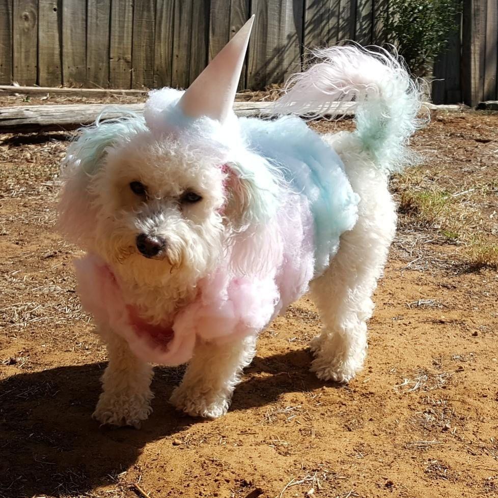 diy cotton candy costume | 2018 diy halloween costume ideas