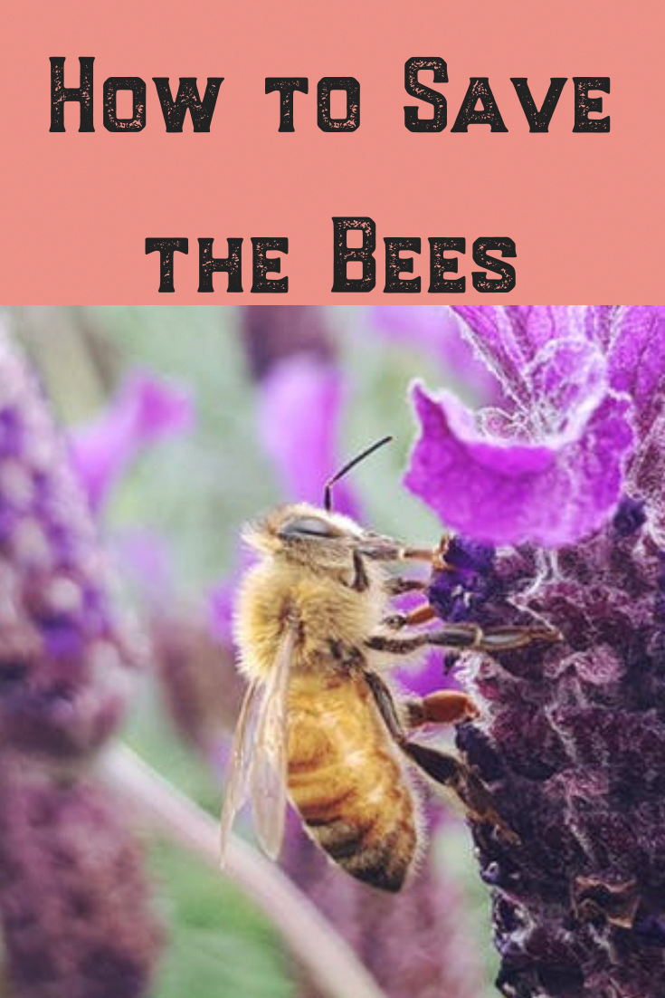 Are you thinking of raising bees in your backyard? Here ...