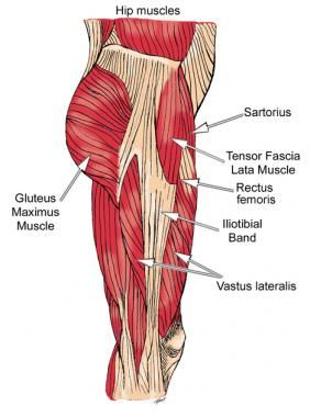 Hip muscles, lateral view. | My Body | Pinterest | Hip muscles, Hip ...