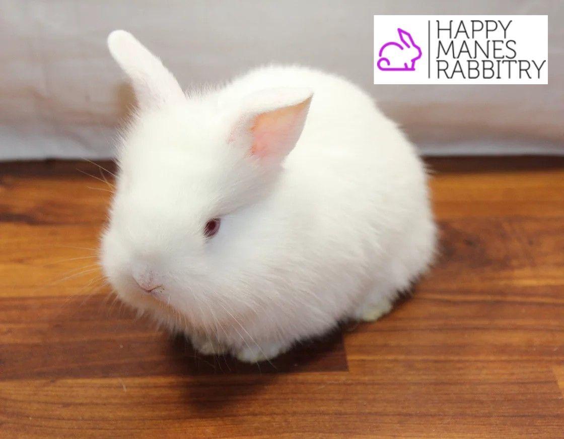 Bunnies Rabbits Pets Cuteanimals Awww Babyanimals Petshop Happymanesrabbitry Cute Animals Pet Shop Baby Animals