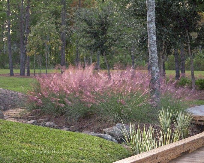 Dwarf Grasses Landscaping Charming dwarf pink muhly grass for landscaping ideas bahe charming dwarf pink muhly grass for landscaping ideas workwithnaturefo