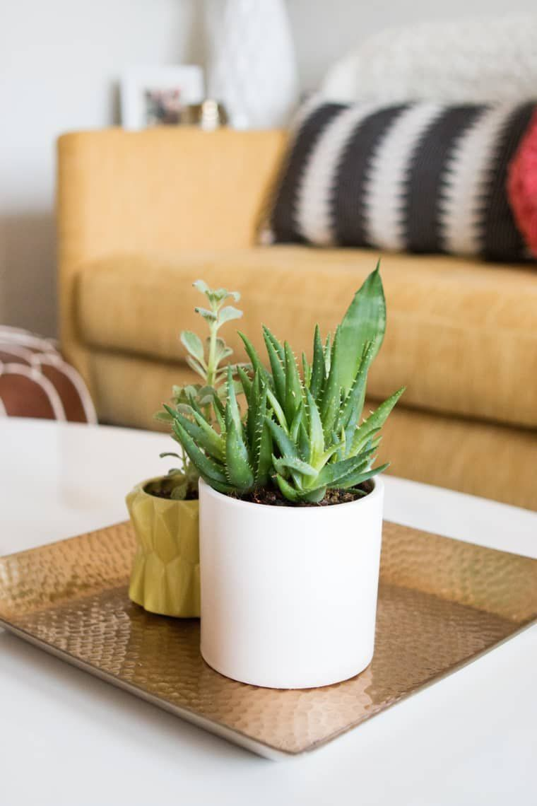 Everything to Know About Keeping Plants Alive in Your Dorm Room is part of Keeping plants alive, Room with plants, Plants, Living room plants, Cool plants, Large plants - The best plants for small spaces and low light, plus watering tips, and more