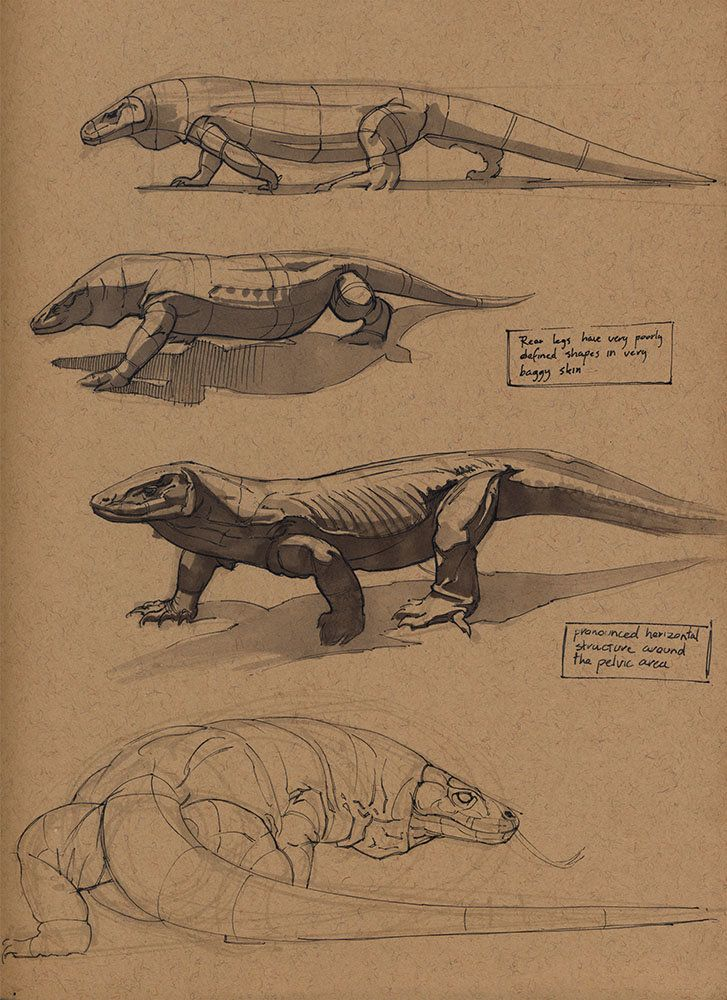 ArtStation - Komodo dragon, Floris van der Peet   Character Designs ...