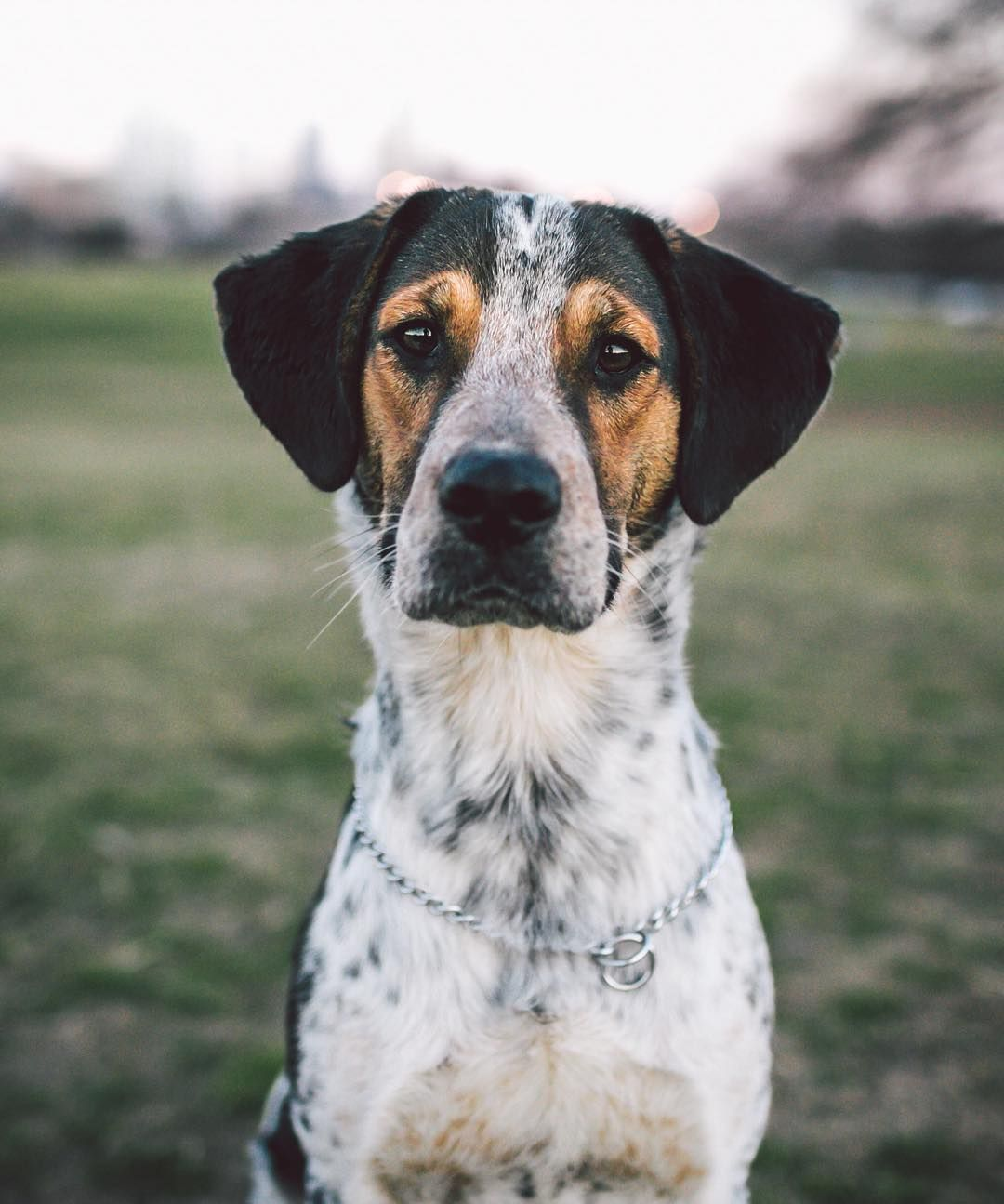 Oxford The 1yr Old Beagle Heeler Mix I Was Running Out Of