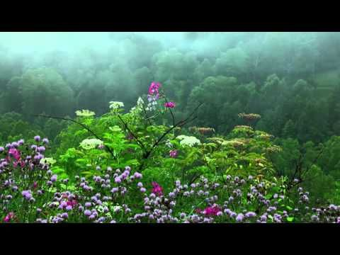 Rain Sounds with Tibetan Singing Bowls and Birds chirping