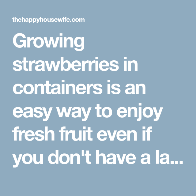 7 Tips for Growing Strawberries in Containers #growingstrawberriesincontainers
