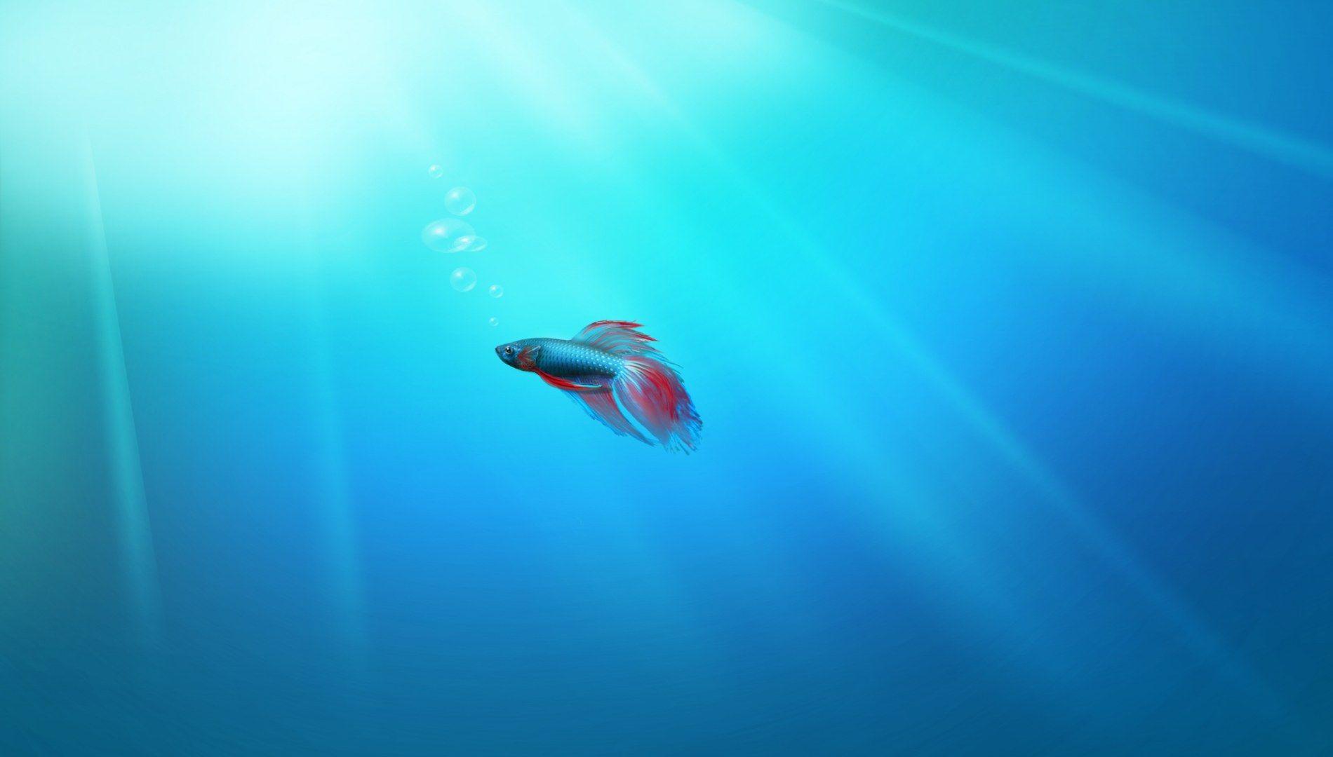 Beautiful Fish Swimming Up Fish Wallpaper Windows Wallpaper