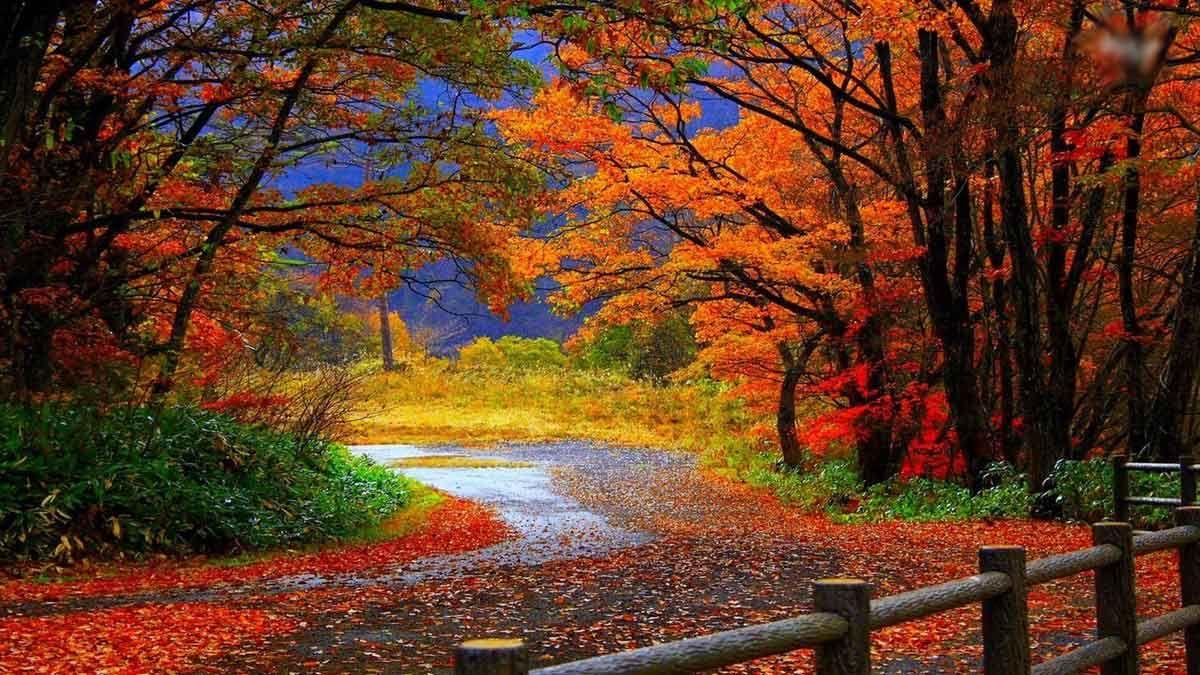 Hermosos Paisajes Naturales Fondos Pantalla Autumn Landscape Nature Wallpapers 3 Fotos De Paisajes Hermosos Paisajes Paisaje De Otono