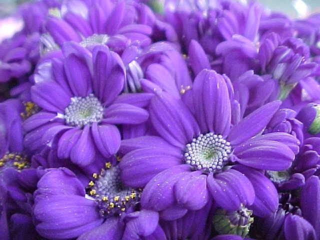 Fiori Di Colore Viola Nomi.Cose Viola Cerca Con Google Significati Dei Colori Fiori