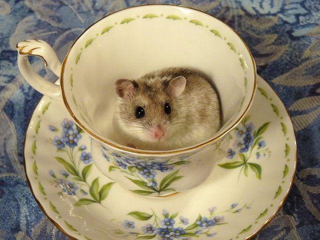Alice Wonderland Mouse Teacup