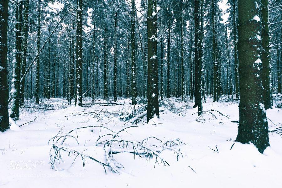 Popular on 500px : Snowy Forest by MarcoSchwanitz