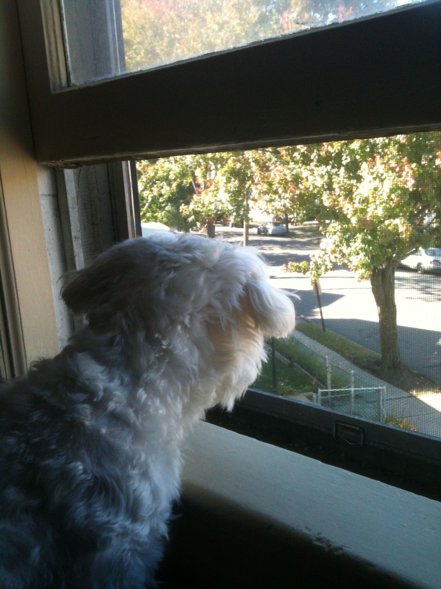 Lola on duty