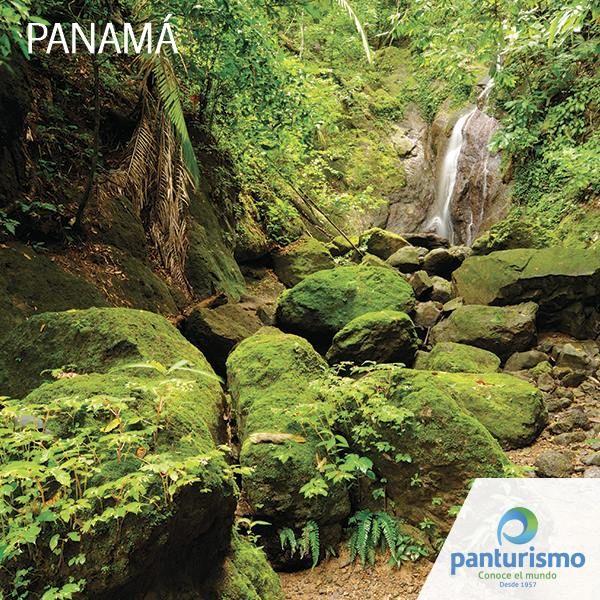 Panamá cuenta con la segunda mayor superficie de Selva frondosa en el mundo, sólo por detrás de la inmensa región del Amazonas, la cual se reparte a lo largo de 8 países, algo increíble teniendo en cuenta que Panamá es un país tan pequeño