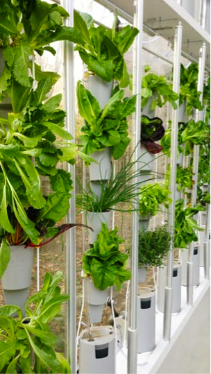 17 Best 1000 images about Vertical Garden Indoor on Pinterest
