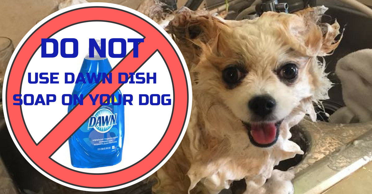Can You Wash Your Dog With Dawn Dish Detergent Dawn Dish Soap For Fleas Dawn Dish Soap Holistic Pet Holistic Pet Care