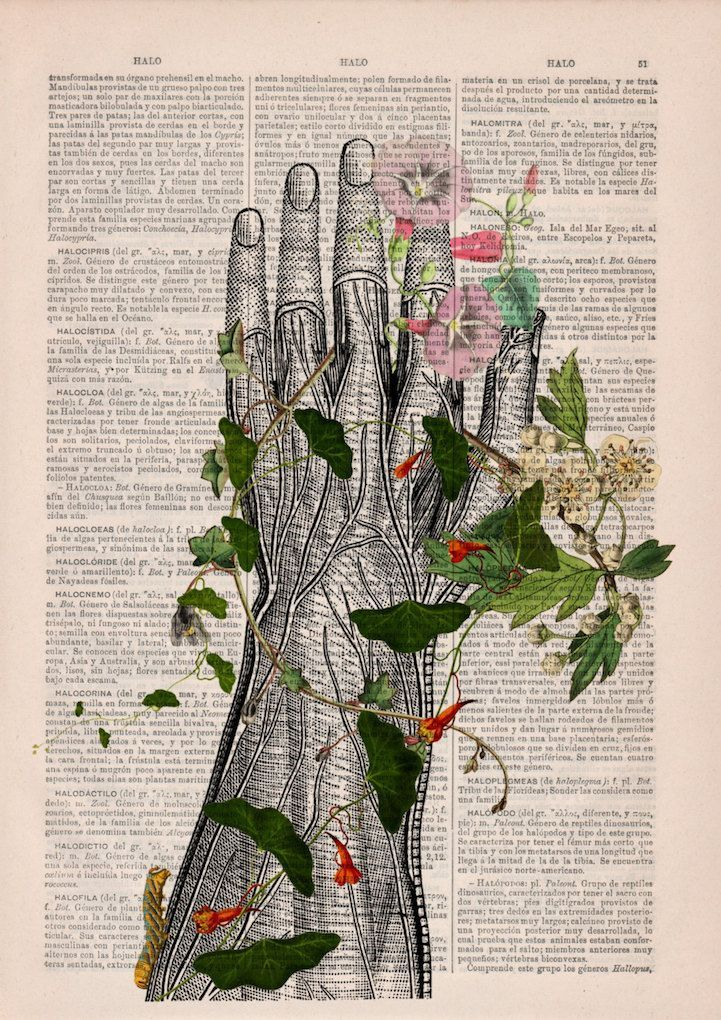 Beautiful Floral Anatomy Illustrations Give New Life to Discarded Pages of Old B... - #Anatomy #Beautiful #Discarded #Floral #give #Illustrations #Life #Pages