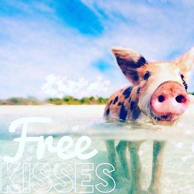 billigparfumedkFREDAGS SMIL  Vi fik et smil på læben da vi faldt over @theswimmingpigs  Skal du en tur til Bahamas i weekenden, kan du få masser af mysser og dejlige svømmeture med de små søde grise  Ha ha, det er da cute  Rigtig god weekend til jer alle  #kisses #weekend #seimmingpigs #fun #friday #bahamas #heltudenforkategori #mensødterdet #godweekend #billigparfumedk