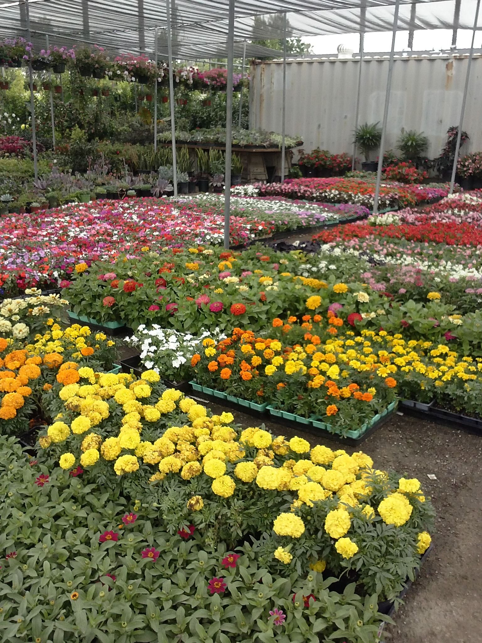 Perennial Ping At The Vineland Nursery In North Hollywood Ca Garden