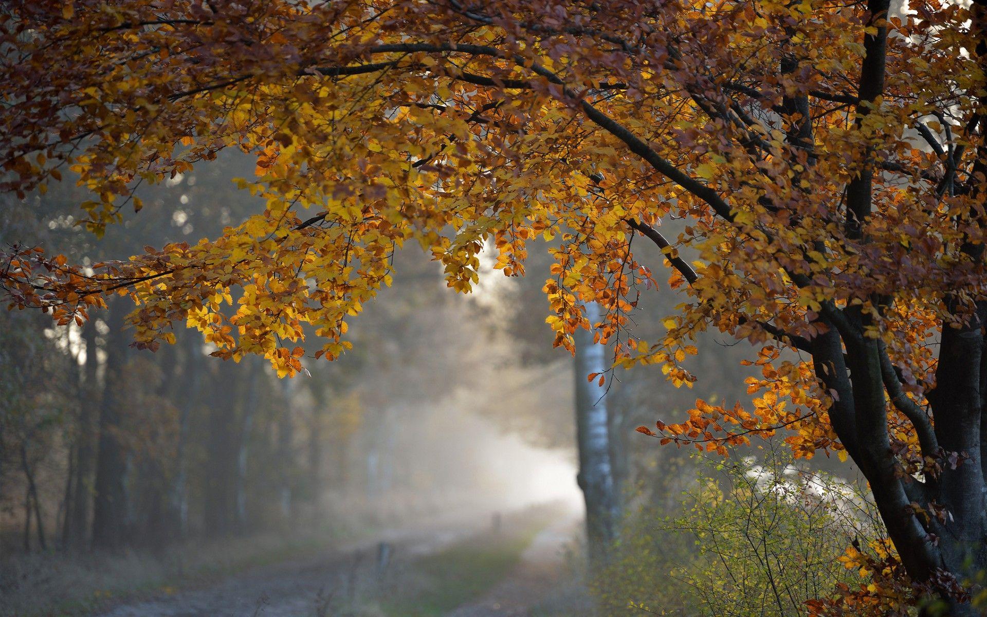 Beautiful Rainy Autumn Wallpaper Wide