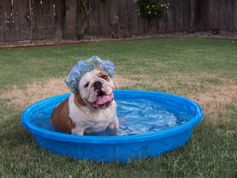 Bathing Bulldogs Puppies Kitties Bulldog Puppies Dog Care