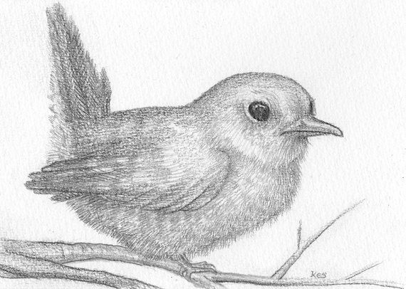 Bird drawing pencil sketch of fledgling by thekestrelandthesea £6 00