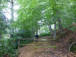 Leading you up the woodland path.....the answer to the Monday Mystery