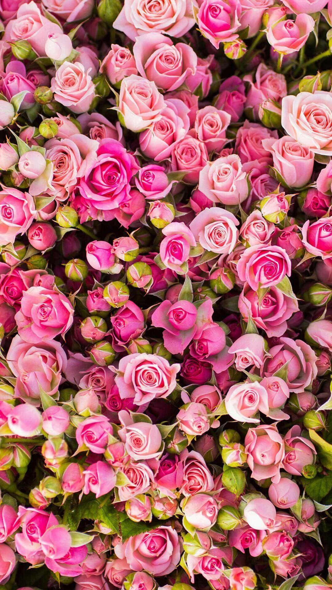 Pin de אמון אברהם em גן מוצא Rosas papel de parede