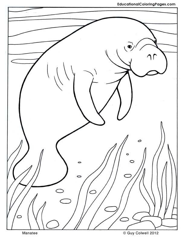 Manatee coloring, mammals coloring pages | teaching | Pinterest ...