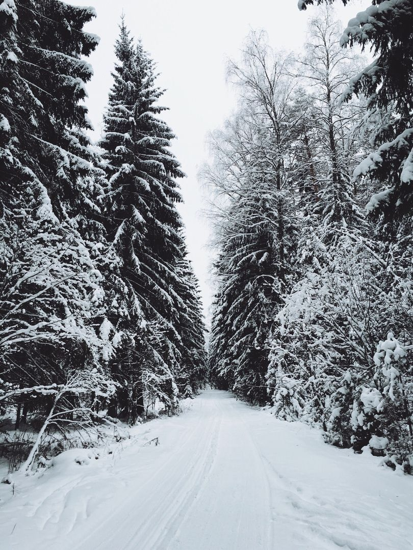 Nature Winter Snow Forest Photography Winter Landscape Nature Photography Trees Winter Snow Photography