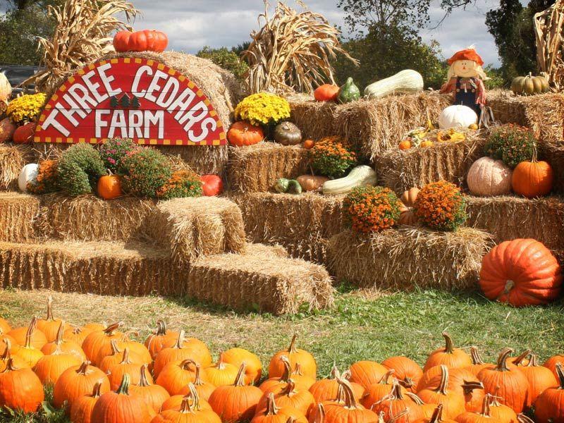 Three Cedars Farm - Gallery   Fall family fun, Farm, Pumpkin patch