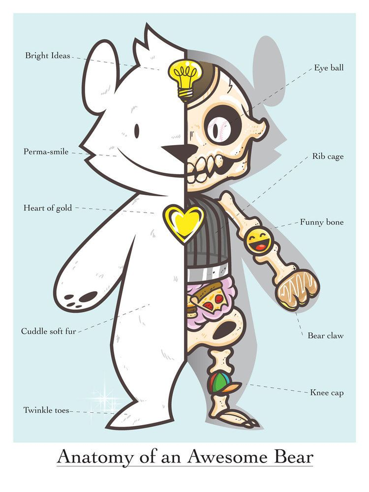 lumbang Anatomy of an Awesome Bear