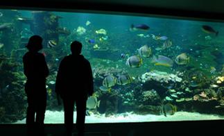 les 25 meilleures id 233 es de la cat 233 gorie nausicaa aquarium sur boulogne sur mer