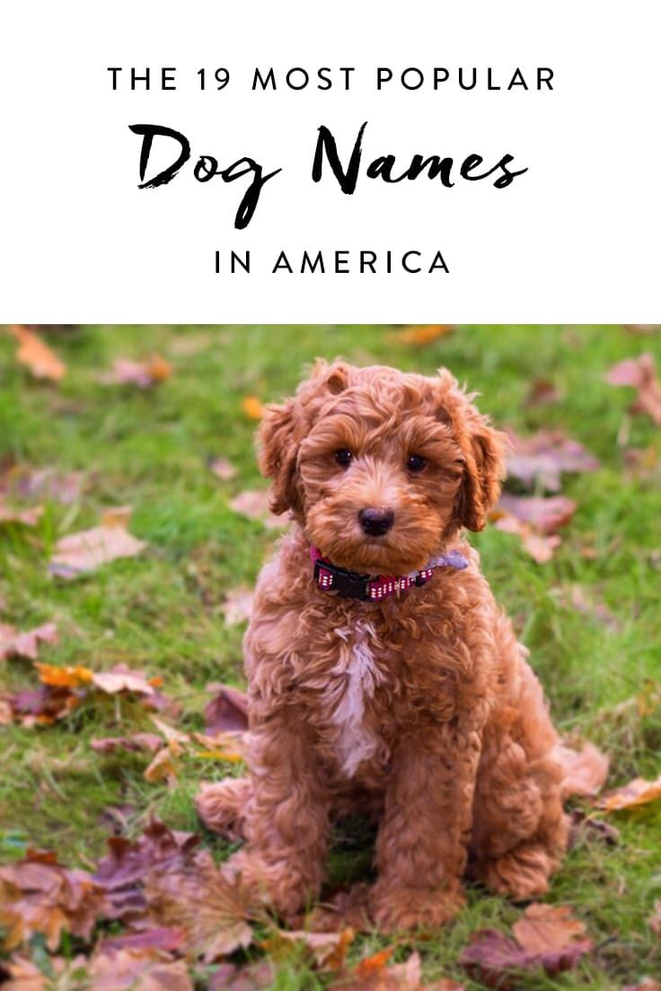 The 19 Most Popular Dog Names In The Country Popular Dog Names Puppy Names Dog Names