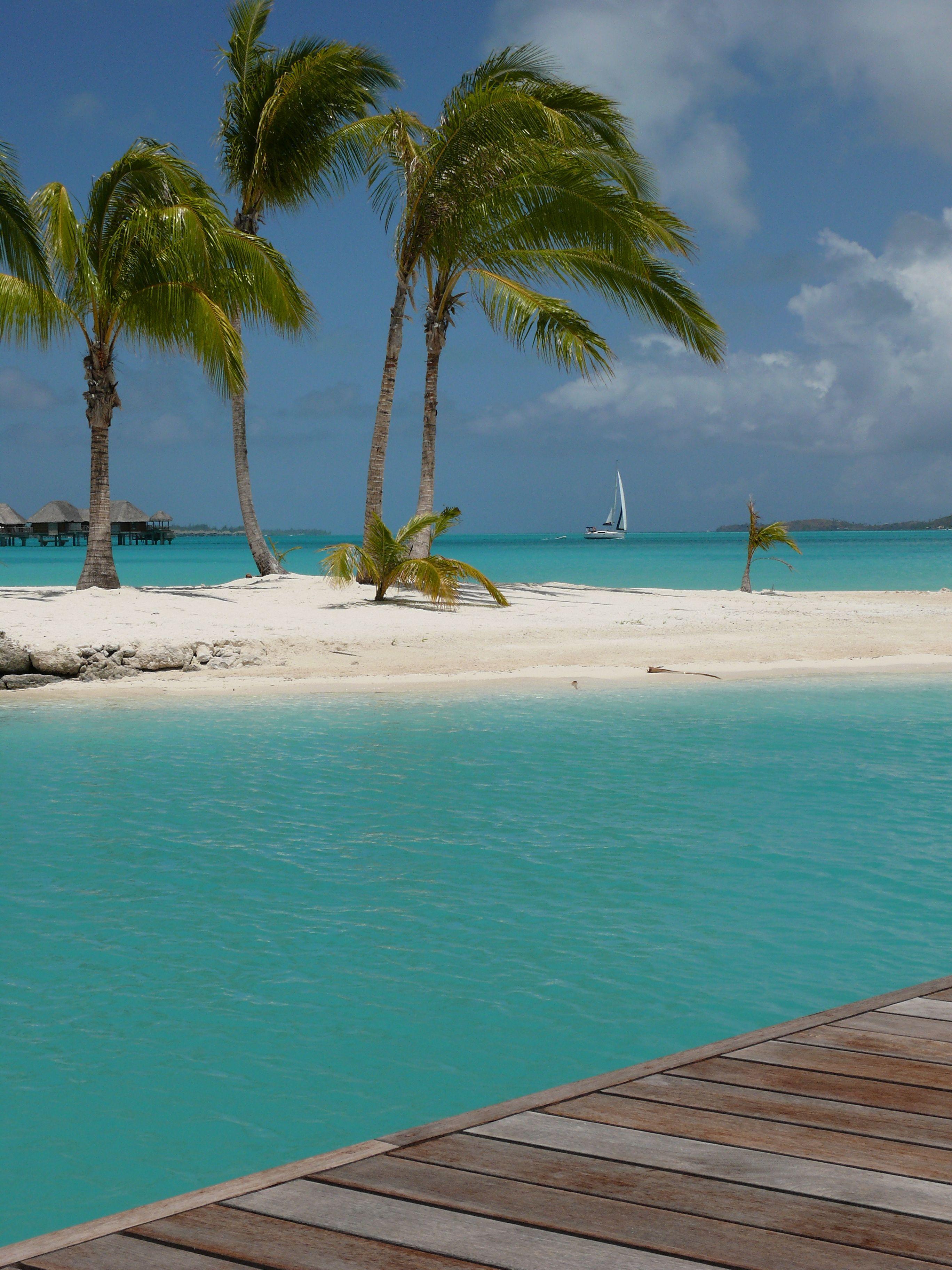 PalmTrees on an Island